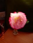 Trandafirul de Domnesti –2