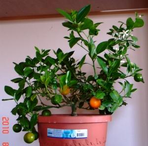 Flori, fructe verzi si fructe copate