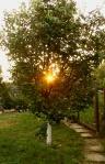 soarele din gutui