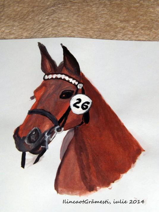 Horse Murgul