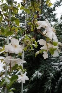 alb in octombrie tarziu